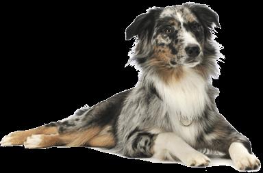 Dog Sitting in Buckhead